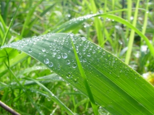 water droplets on grass