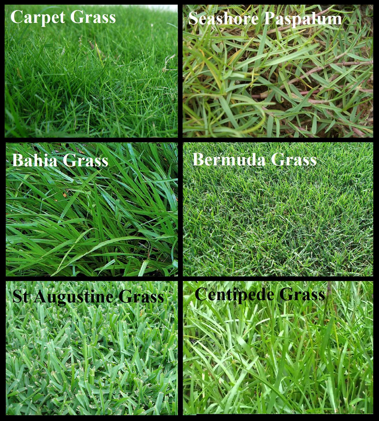 Types Of Grass For Orlando Lawn Irrigation Orlando