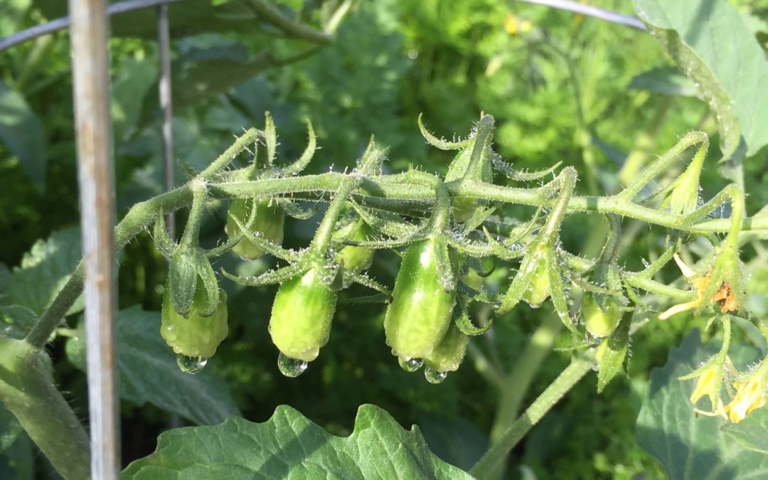 Top Veggies to Plant in Your Garden This Month