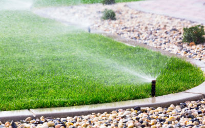 Do I Need to Water My Lawn in the Winter?