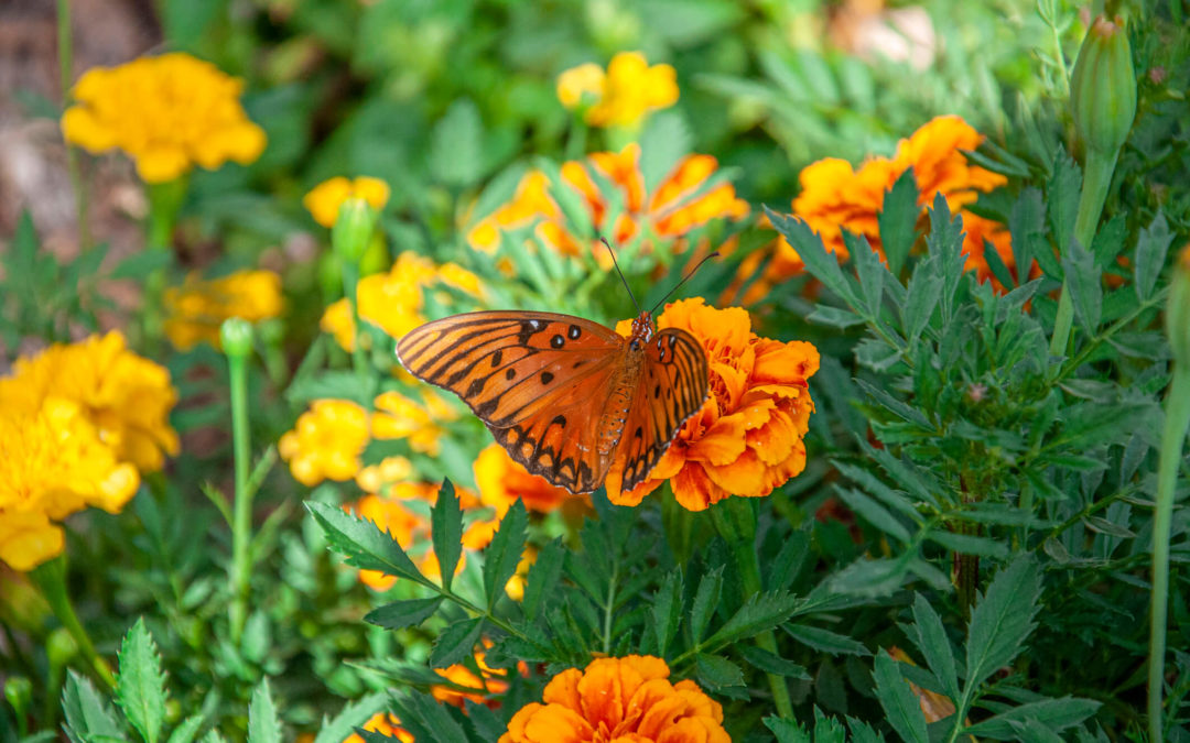 Ready for a Butterfly Garden?