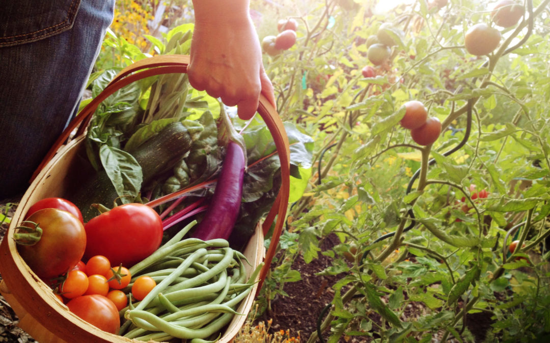 Veggies You Should Consider in Your Summer Garden