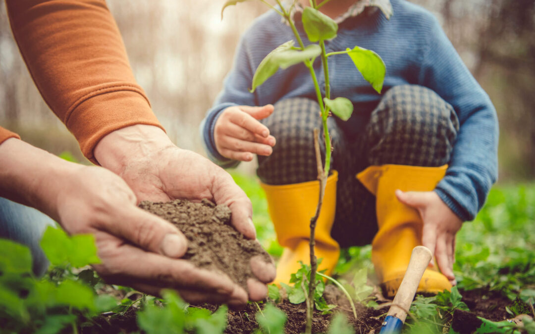 Planting Trees to Save Energy