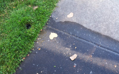 Signs You are Losing Money Due to a Hidden Irrigation Leak