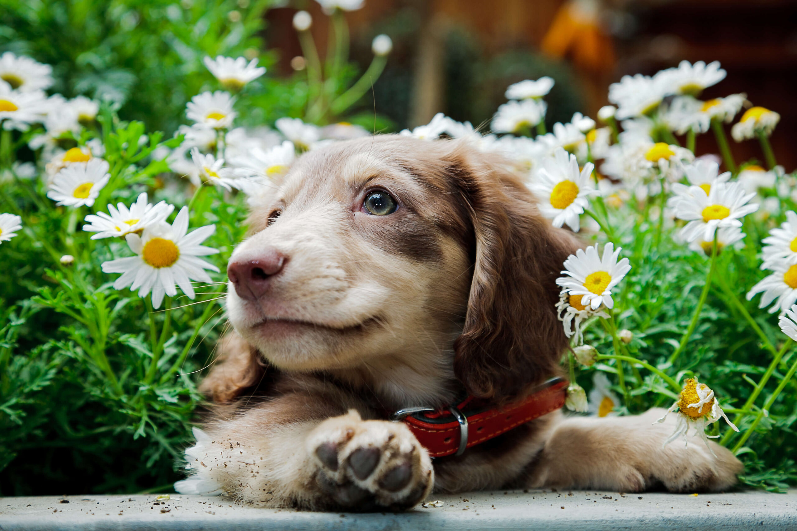 Landscaping Plants That Are Toxic to Dogs