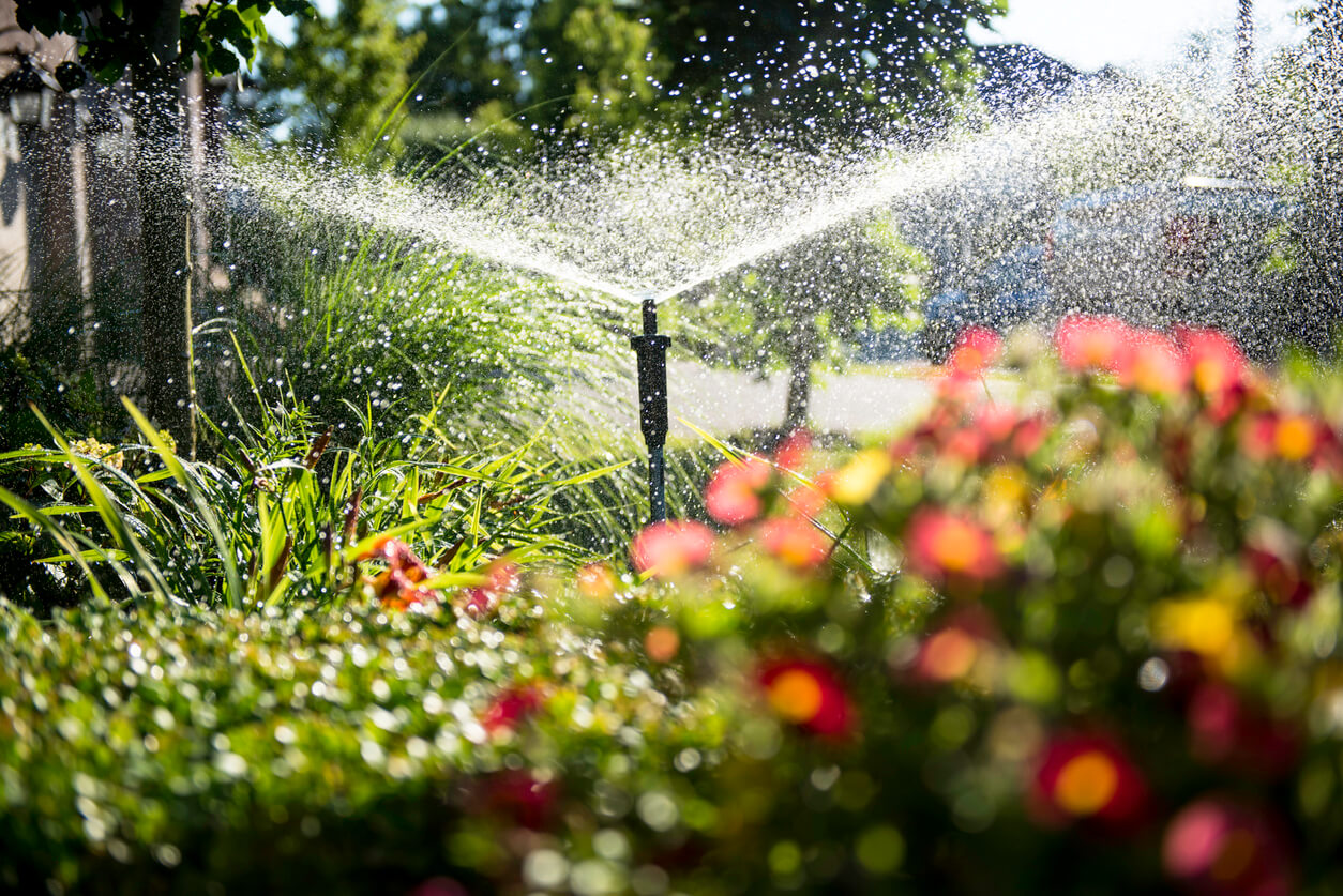 Easy Steps to Controlling Insects on Your Ornamental Shrubs 2