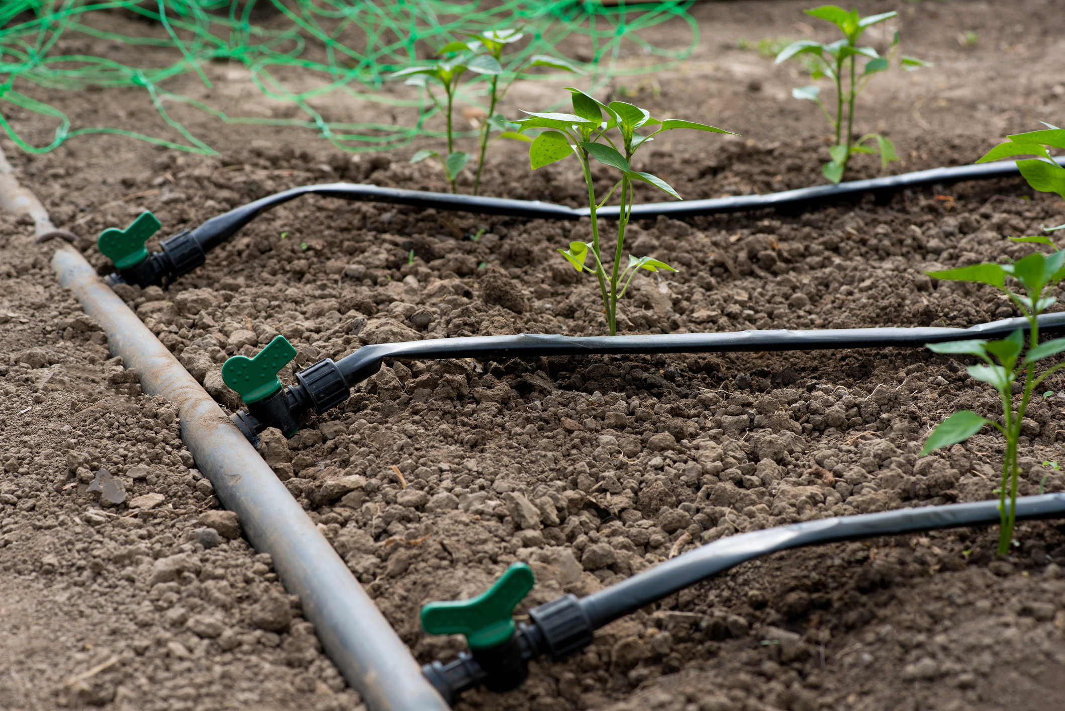 Why Drip Irrigation is Important to Your Garden - 3