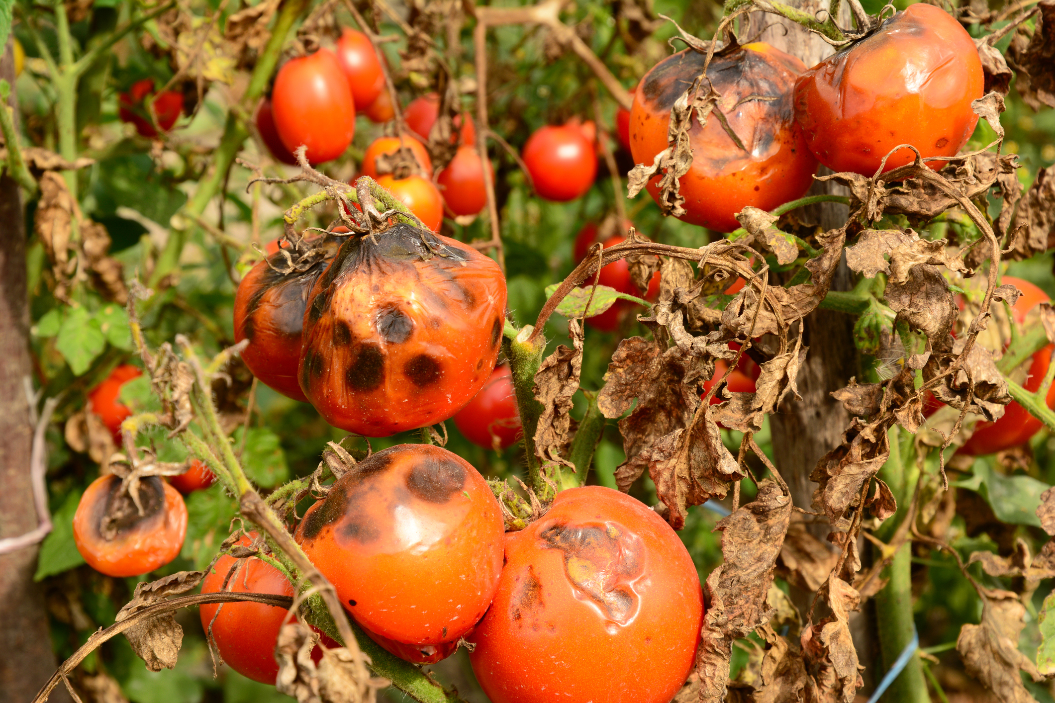 Why Drip Irrigation is Important to Your Garden - 5